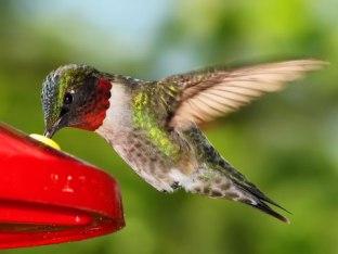 ab144-hummingbird-3